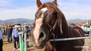 Reinosa San Mateo 2017  | Feria de ganado