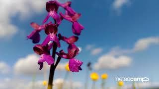 Ya es primavera en Cantabria: locura floral y animal a orillas del Embalse del Ebro